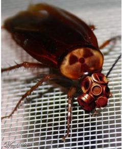 roach with mask lolbugz.com